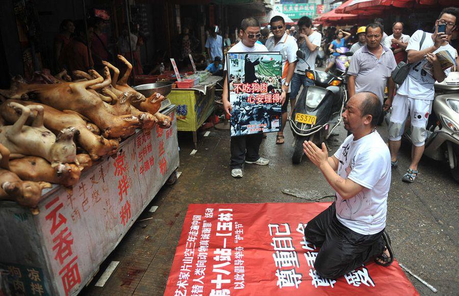 广西玉林狗肉节一万只狗待宰, 引发动物保护者和范冰冰等中国多名艺人的强烈反对 (多图,力荐) - 阳光师姐 - 阳光师姐的清净之疆网易博客,欢迎来访!